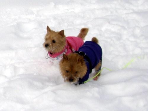 ふっかふかの雪