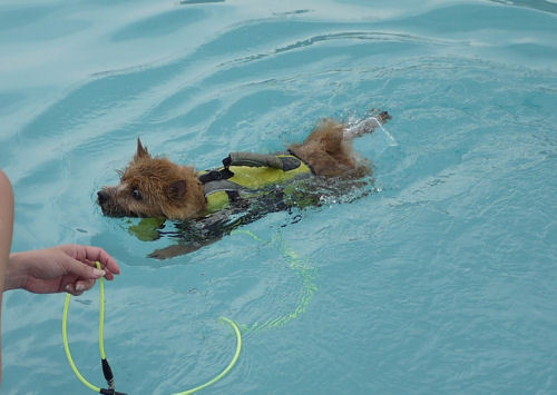 クーパの水泳