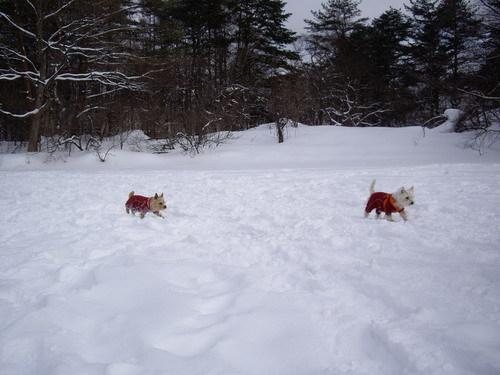 雪の上も慣れたものよ